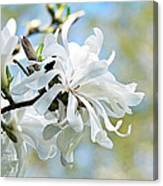 Wild Magnolia Blooms Canvas Print