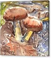 Wild Mushrooms Canvas Print