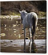 Wild Mustang On The River  Canvas Print
