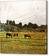 Wild Mustangs Carpe Diem Canvas Print