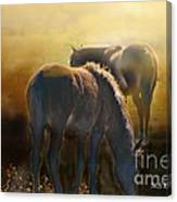 Wild Mustangs In The Mist Canvas Print