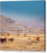 Wild Nevada Mustang Herd Canvas Print