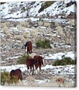 Wild Nevada Mustangs 2 Canvas Print