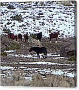Wild Nevada Mustangs Canvas Print