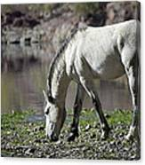 Wild On The River  Canvas Print
