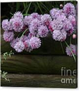 Wild Onion Flowers Canvas Print
