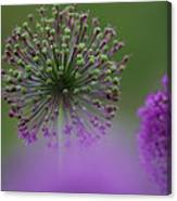 Wild Onion Canvas Print