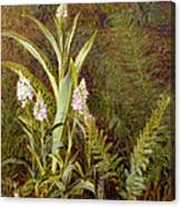 Wild Orchids Canvas Print