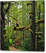 Wild Pacific Trail Canvas Print