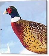 Wild Pheasant Canvas Print
