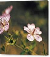 Wild Pink Canvas Print