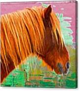 Wild Pony Abstract Canvas Print