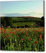 Wild Poppies Growing In A Field, Wylye Canvas Print