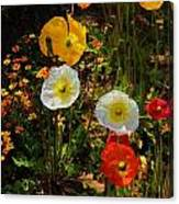 Wild Poppies Canvas Print