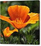 Wild Poppy On The Loose Canvas Print
