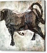 Wild Raging Bull Canvas Print