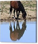 Wild Reflection Canvas Print