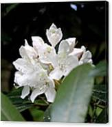 Wild Rhododendron Blossom Canvas Print