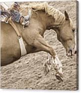 Wild Ride Canvas Print