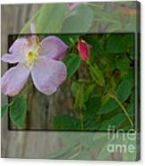 Wild Rose Out Of Bounds 1 Canvas Print