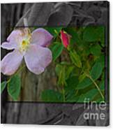 Wild Rose Out Of Bounds 2 Canvas Print