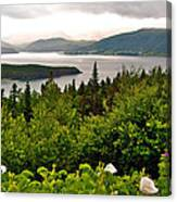 Wild Roses At Photographer's Point Overlooking Bonne Bay In Gros Morne Np-nl Canvas Print