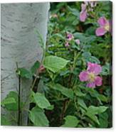 Wild Roses With Birch Tree Canvas Print