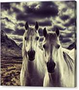 Wild Stallions Canvas Print