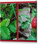 Wild Strawberry Plant - Fragaria Virginiana Canvas Print