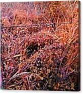 Wild Sunburst  Canvas Print