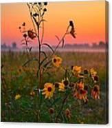 Wild Sunflowers At Dawn Canvas Print