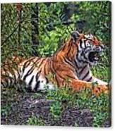 Wild Tiger Canvas Print