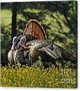 Wild Turkey 2 Canvas Print