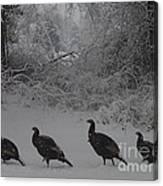 Wild Turkey Winter Canvas Print