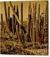 Wild West Ivb Canvas Print