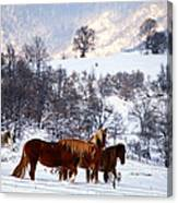 Wild Winter  Canvas Print