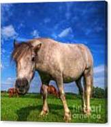 Wild Young Horse On The Field Canvas Print
