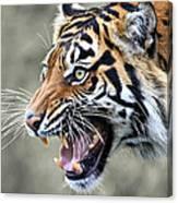 Wildcat II Canvas Print