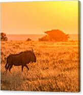 Wildebeest Sunset - Namibia Africa Photograph Canvas Print