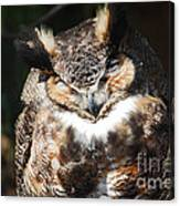 Wilderness Owl Canvas Print