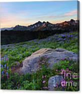 Wildflower Dawning Canvas Print