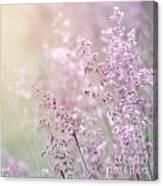 Wildflower Fine Art Background Canvas Print