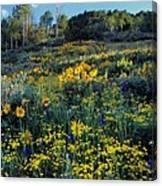 Wildflower Hillside Canvas Print