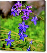 Wildflower Larkspur Canvas Print