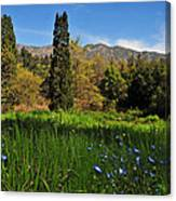 Wildflower Meadow At Descanso Gardens Canvas Print