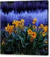 Wildflower Reflection Canvas Print
