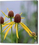 Wildflower Spinners Canvas Print