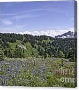 Wildflower Vista Canvas Print