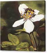 Wildflower Wildlife Canvas Print