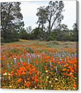 Wildflower Wonderland 2 Canvas Print